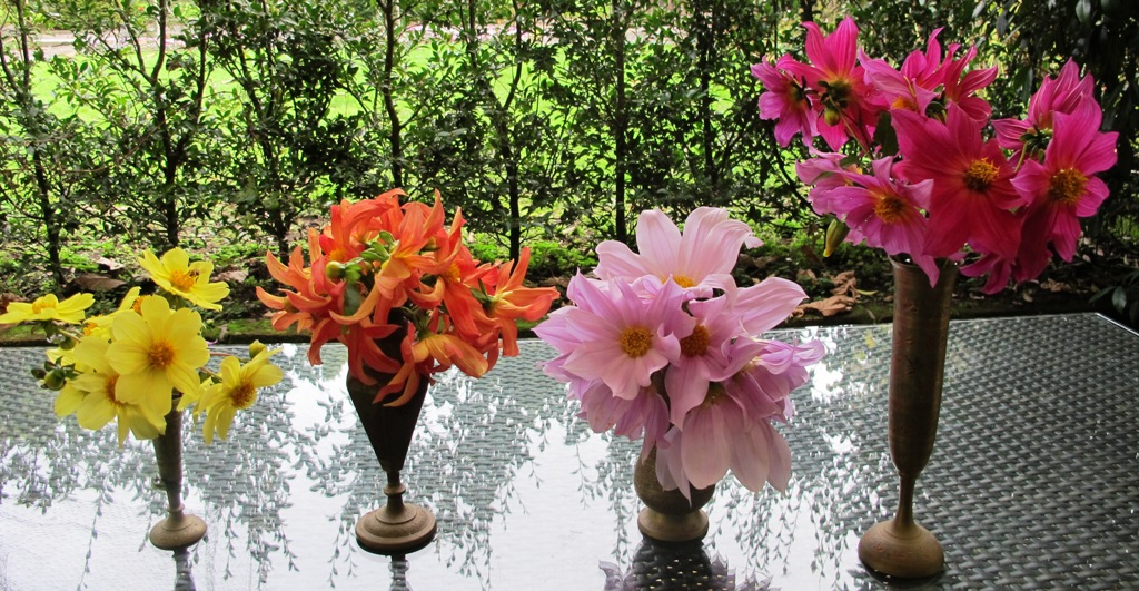 """Left to right: 'Chameleon"""" , 'Orchid' (both Hammett varieties), D. imperialis and an unnamed Hammett variety."""