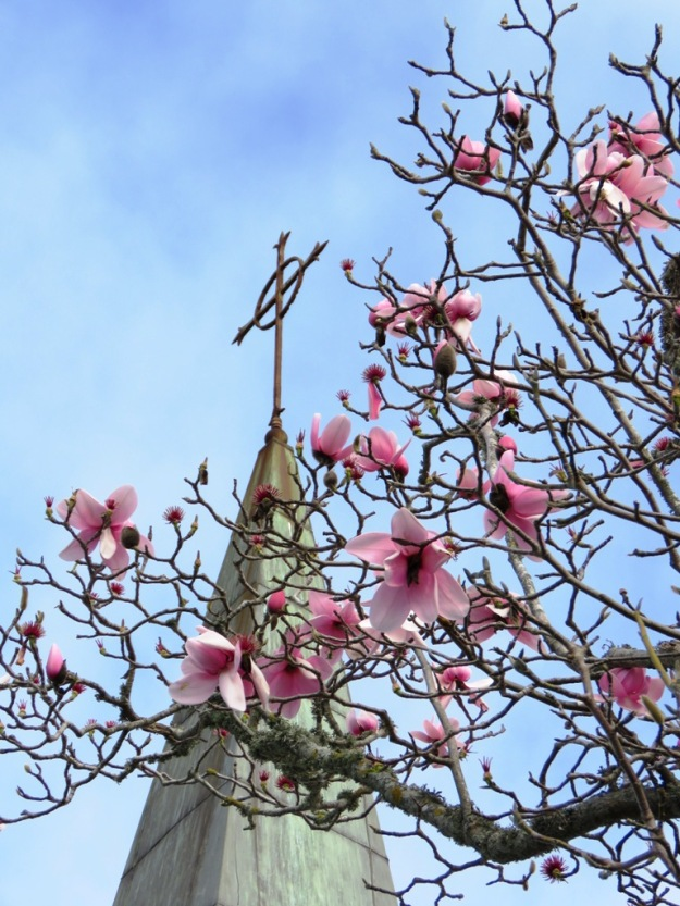 The Magnolia and the Cross