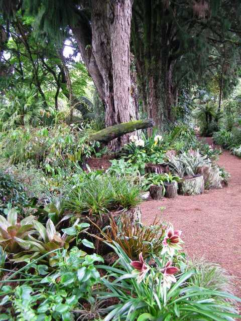 Our Rimu Avenue with its informal raised beds which are essentially a stumpery
