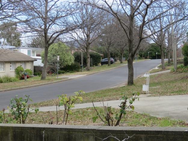 Canberra suburbia