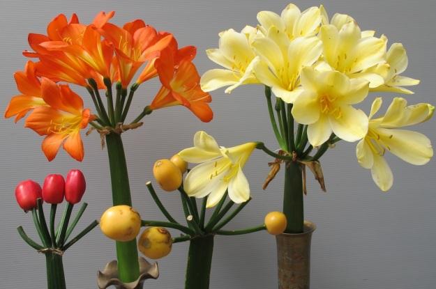 Orange seed will flower orange or red, yellow seeds will flower yellow