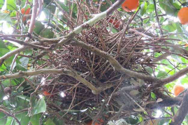 The kereru nest scores about 1/10 for skill are care.