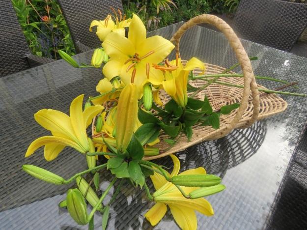 Aurelian lily season has started