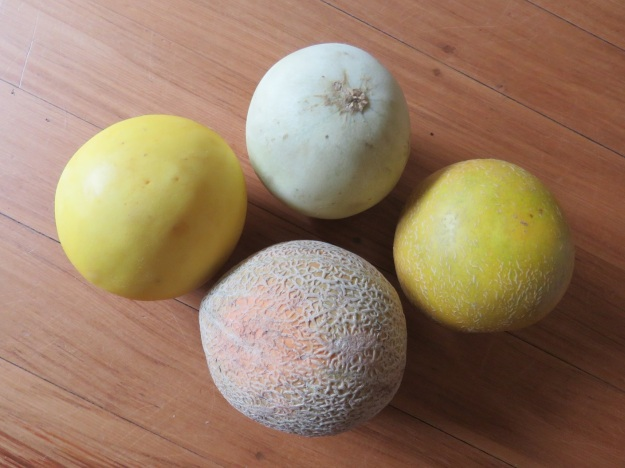 Clockwise from the centre top, bought as honeydew, Galia, rock and Twist melons